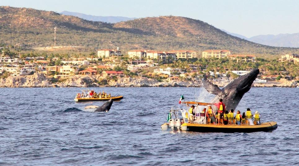 Avistamento de baleias (Foto: shutterstock.com)