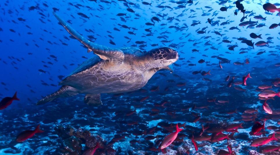 mergulho-equador