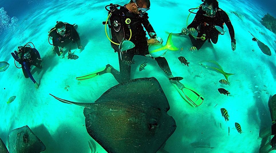 Mergulho em Grand Cayman (Foto: divulgação)