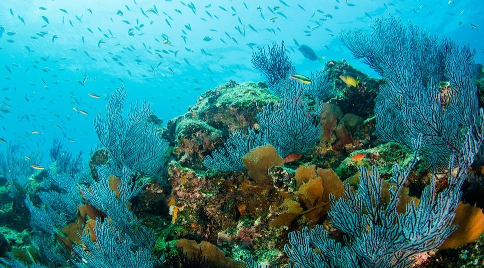 Parque Nacional Marinho Cabo Pulmo (Foto: shutterstock.com)
