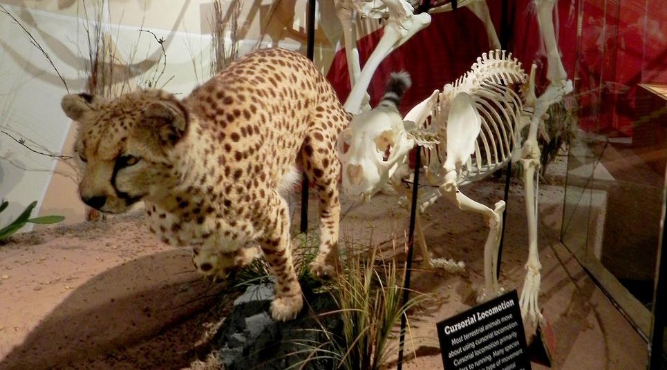 Skeletons Animals Unveiled (Foto: divulgação)