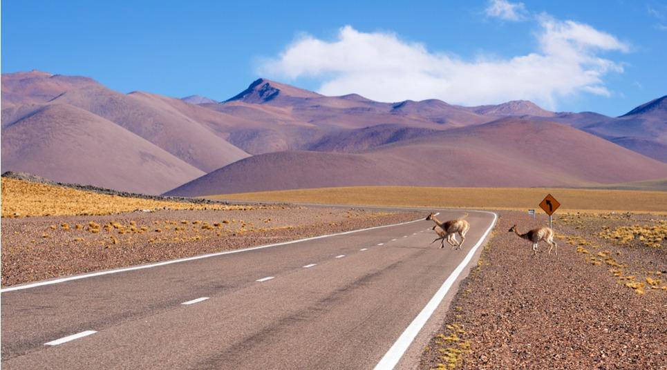 Além das belezas naturais, é possível observar a vida animal em Catamarca (foto: shutterstock)