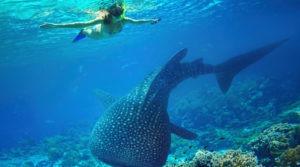 mergulho em Aruba