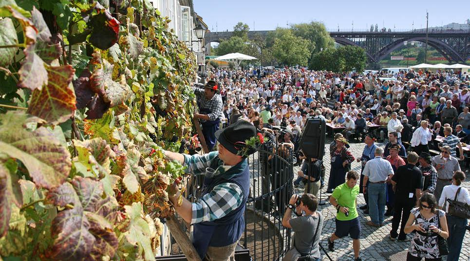 Colheita no Old Vine Festival