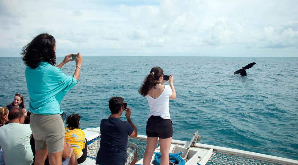 Observação de baleias dos barcos liveaboards