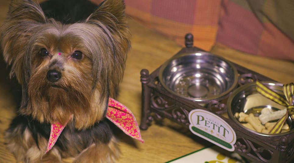 Cachorro hospedado no Petit Casa da Montanha