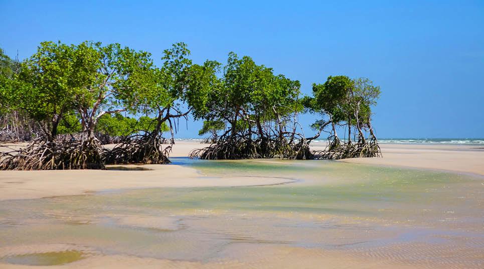 A bela natureza da Ilha de Marajó