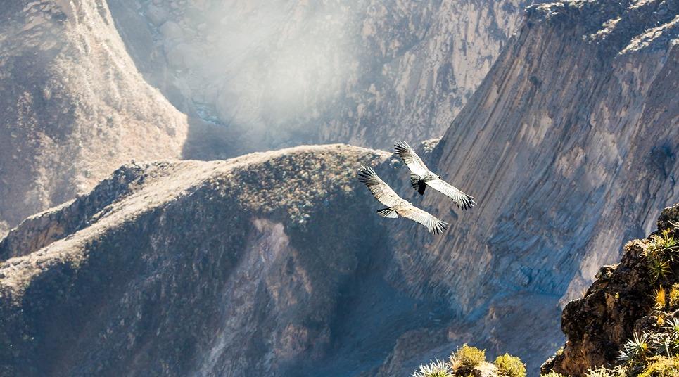 O voo do Condor dos Andes