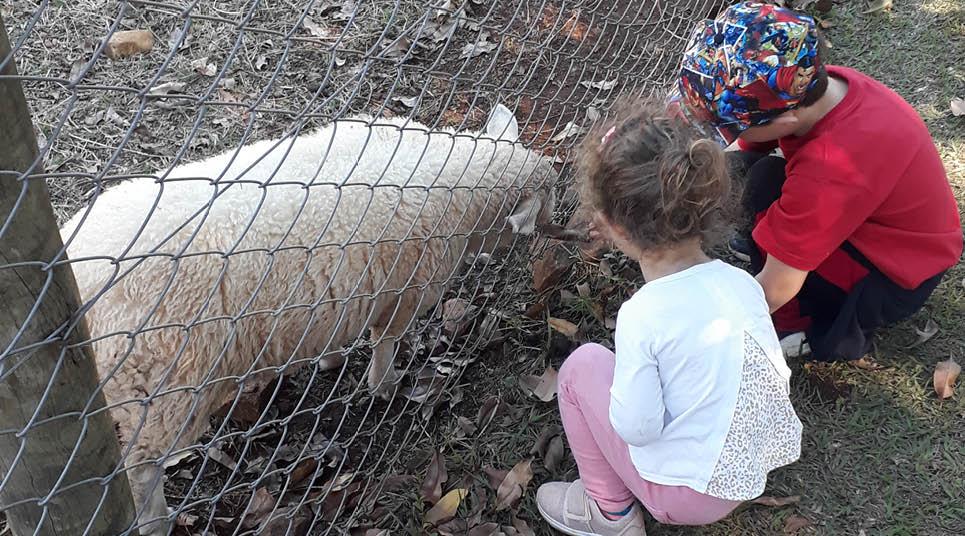 As crianças se divertem na Fazendinha