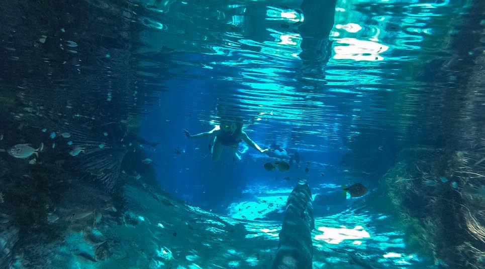 Flutuação em Nobres