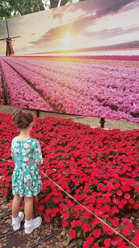 Campos floridos em Holambra