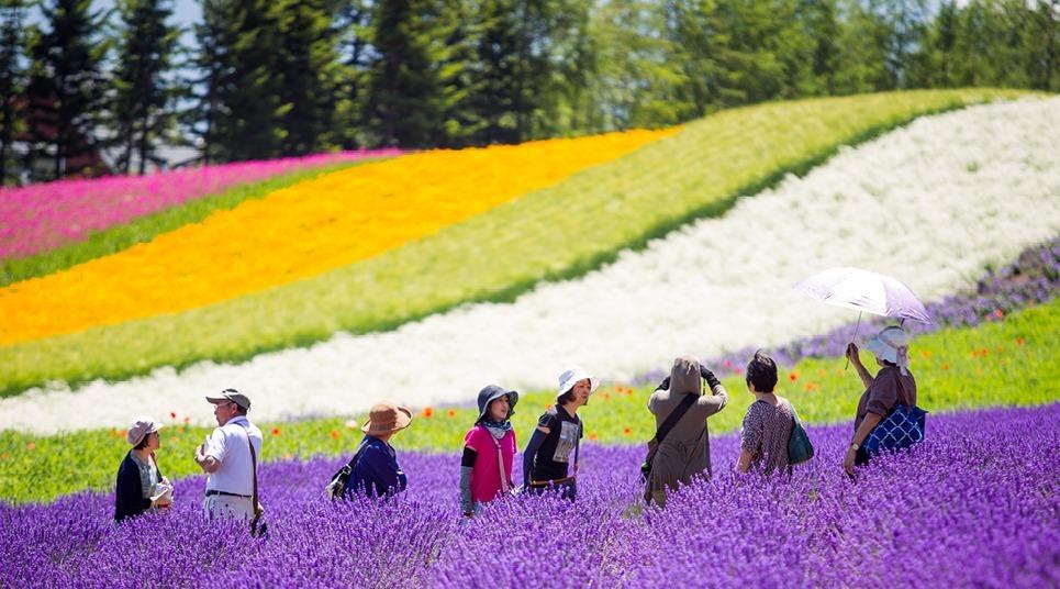 A fazenda Tomita em Hokkaido, no Japão, é super colorida (foto: Shutterstock)