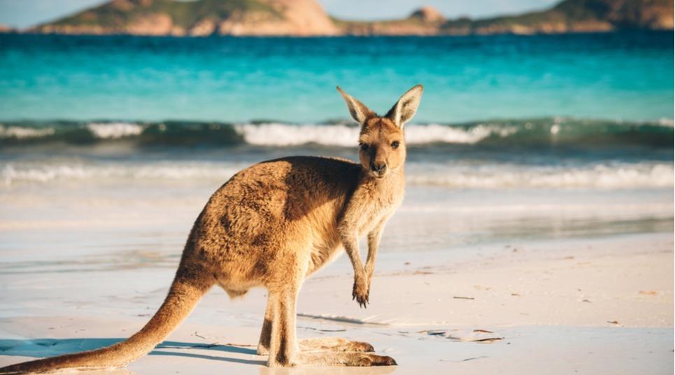 Austrália: terra dos cangurus (foto: shutterstock)
