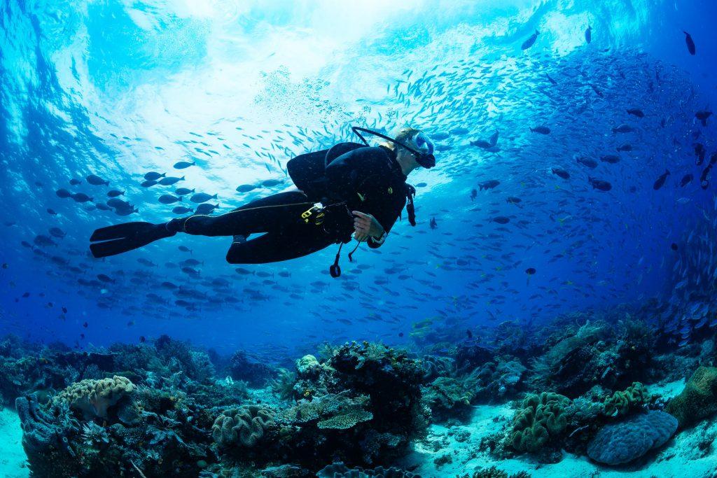 Escolas de mergulho no Brasil oferecem certificados para a prática, bem como equipamentos de mergulho (foto: shutterstock)