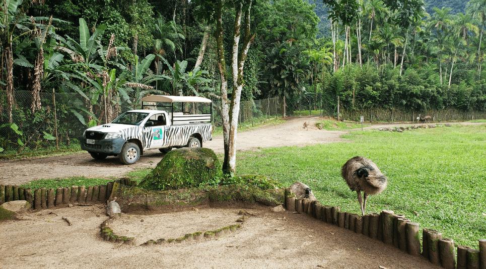 Vale a pena visitar o safári, afinal, a atração é pouco conhecida no Brasil (foto: Tarcila Ferro)